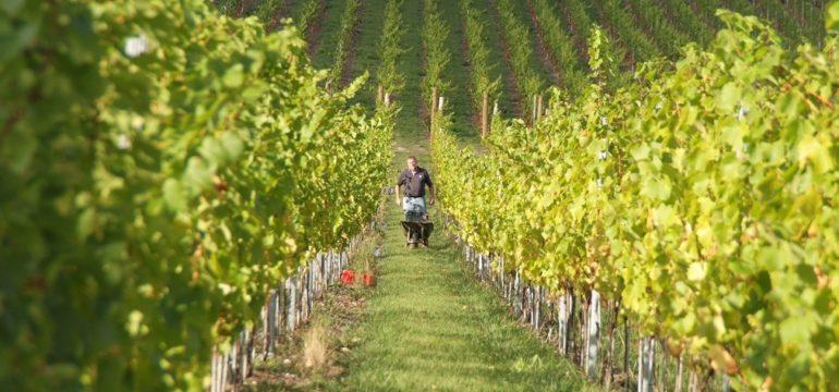 English Wine Week 2017