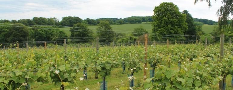 Saving the vines